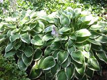 jardin jacques briant